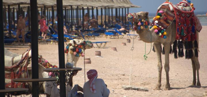 beach_camel_egypt