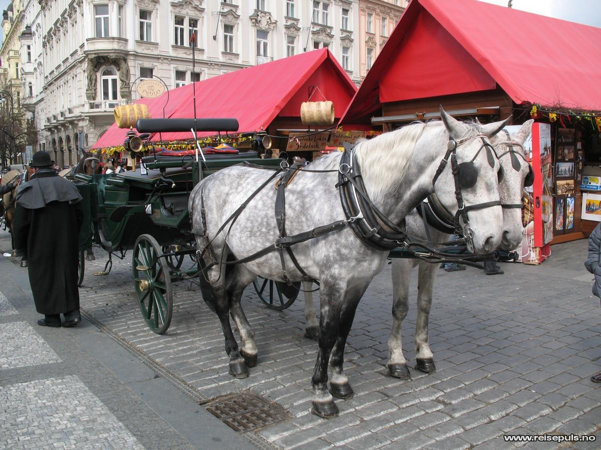hest og Slede i Praha
