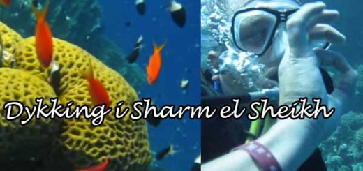 dykking-i-sharm
